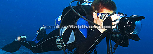 Maldives - Underwater Photography