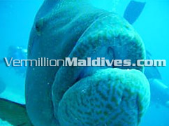 Adaaran Club Bathala Maldives Resort Hotel - Let's dive & travel together. Book me
