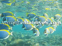 Maldives Holiday with beautiful under water environment of Bathala