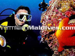 Meedhupparu offers great diving. The beautiful Maldives under water