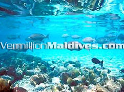 Beautiful house reefs & Under water of Maldives