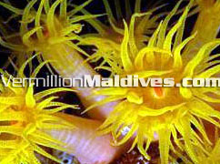 Maldives Under water beauty lies for  you to explore