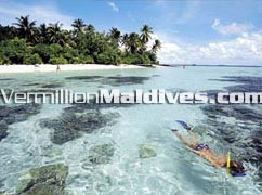 Free Snorkeling Tours at Athuruga. Cheap Holidays