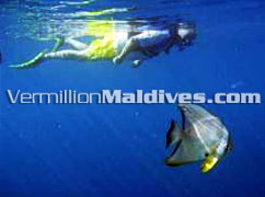 Snorkeling at Banyan Tree Maldives – Under water & diving Holiday choice