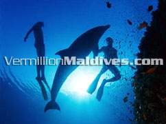 Underwater Life of Maldives – Grand Island Resort by Centara Resort and Spa