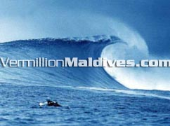 Your dream surfing Vacation Place in Maldives