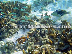 Snorkeling - Cinnamon Dhonveli Maldives – Maldives Resort