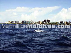 Club Faru Offers Male' Excursions. Male' the small capital of Maldives.