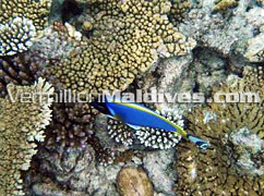 Snorkeling & diving at Coco Palm Bodu Hithi Maldives