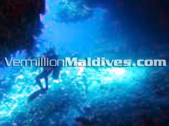Hide under the water. Beautiful Maldives Under water Paradise. Explore
