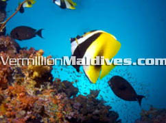 Dive Maldives and experience the hidden beauty of Maldives