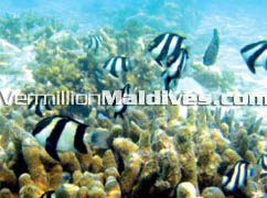 Underwater Maldives: Book a diving holiday with the best online rates
