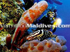 Visit Maldives Eriyadhu & see the under water beauty with your loved one, family or partner