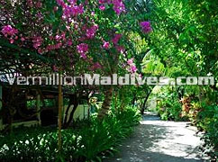 Eriyadu Maldives – a Maldivian style resort with a tropical garden of plants