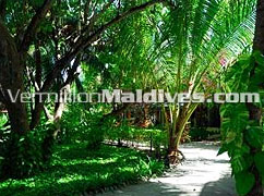 Path way to the rooms of Resort Maldives Eriyadu. Simple and beautiful