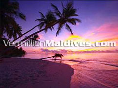 Maldives Colours : Sunset at Filitheyo Maldives Hotels
