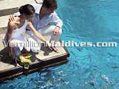 Fish Feeding at Landaa Giraaavaru. Witness your honeymoon by loved ones