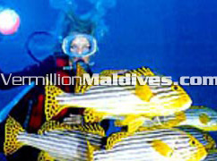 Hotel Giraavaru Maldives is a Scuba Diving resorts