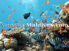 Hilton Irufushi with very great and good diving sites near bye the resort