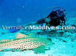 Hiton Maldives Irufushi Maldives under water scuba diving available at the Hotel