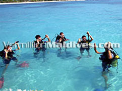 Holiday Island Maldives offers diving & other such nice moments