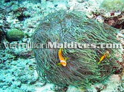 Enjoy Diving excursion on your stay in Hulhule Island Hotel – Maldives airport Hotel