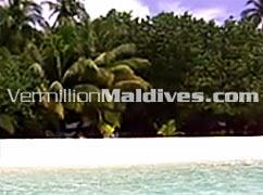 Beach of White Sand at Raalhu veli Resort Hotel Maldives