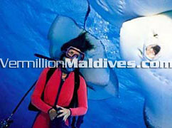 Maldives is not only Sun, Sand, land & above Water… See what lies below