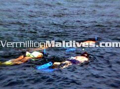 Snorkeling & diving available at Kuramathi Village Maldives