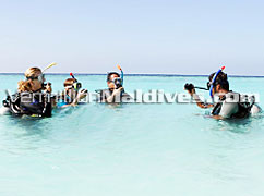 Lily Beach Resort Maldives is VERY famous for snorkeling and diving