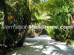Lush and tropical paradise of Madoogali in Maldives – Best Value for your Money