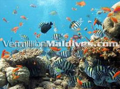Madoogali Maldives with very great and good diving sites near by the resort