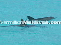 Dolphin tours & excursions available at this beautiful Holiday island