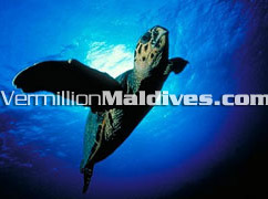 Makunudu Maldives : Great Diving Resorts of Maldives