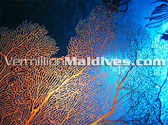 Visit Maldives and see the under water., beauty lies and experience it