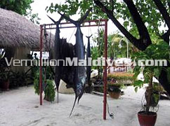Catch from the big game fishing at Nika Island Resort