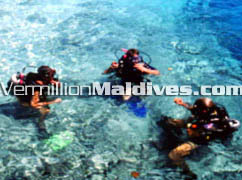 PADI Diving in Olhuveli Maldives Resort is an option for you