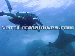 Wonder and imagine diving with your underwater friends at Maldives Konotaa