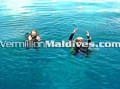 Diving Vacation place – Friendly fish in the natural waters of Maldives