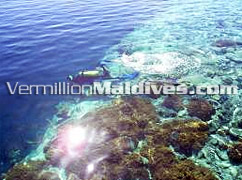 Ranveli Maldives is a diving Resort with House Reef to come across