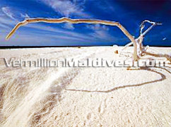 Powder white sand in Renaissance Maldives – Resort from the Marriot International Group