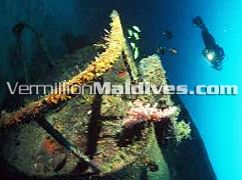 Wreck Diving at Full moon: Exotic 5 star dive resort in Maldives