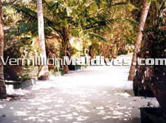 The tropical Maldivian environment at Summer Island. Truly simple and natural