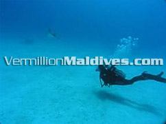 Under Water – Scuba Diving in the Maldives Hotel Summer Island Resort