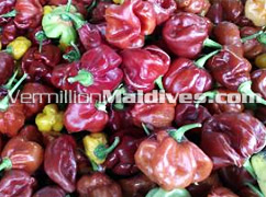 Fresh and Hot Maldives Chilli - Great Taste in MALDIVES Villivaru