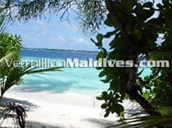 Lush Vegetation and Nice Beach of Villivaru Island Maldives