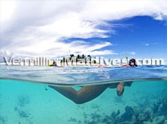Snorkeling and Diving in Maldives – Zitahli Dholiyadoo Maldives